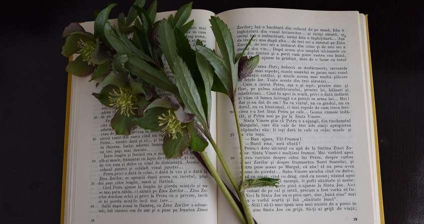 Foto av en uppslagen bok med en grön kvist liggande i uppslaget